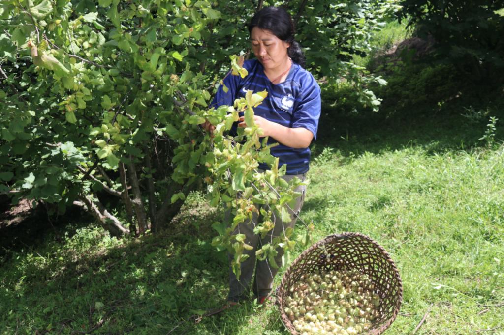 Mountain Hazelnuts Bhutan Case Study